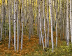 Autumn Aspen, Kebler Pass by John Barger. (Landscape Photography)