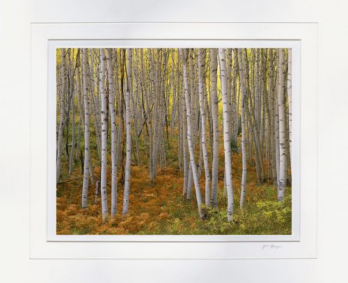 Autumn Aspen, Kebler Pass - matted by John Barger. (Landscape Photography)