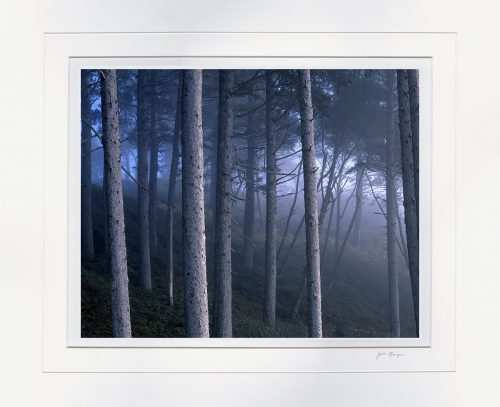 Foggy Coastal Spruce - matted by John Barger. (Coastal Landscape Photography)
