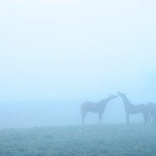 horses-in-the-fog
