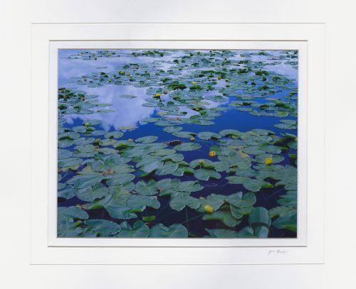 Pond Lily Reflection - matted by John Barger. ()