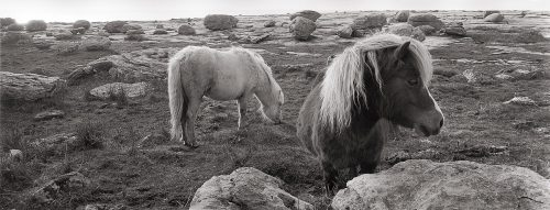 Ponies on the Burren, Co Clare by Doug Plummer. (Ireland Countryside Photograph)