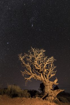 Reach for the Stars by Lin Teichman (Photograph)