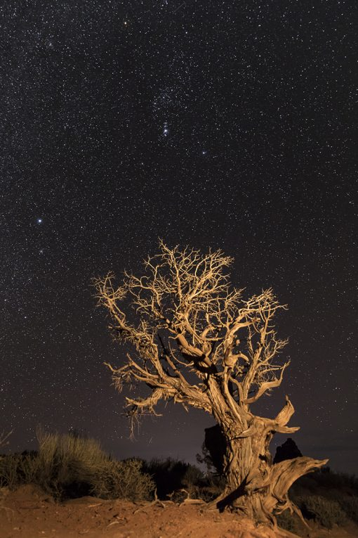 Reach for the Stars by Lin Teichman (Photograph)